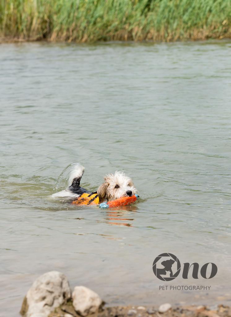Merrick_swimming