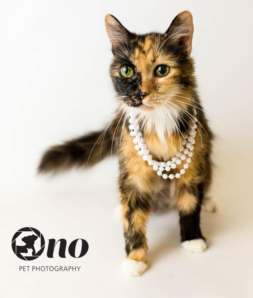 Phoebe_cat